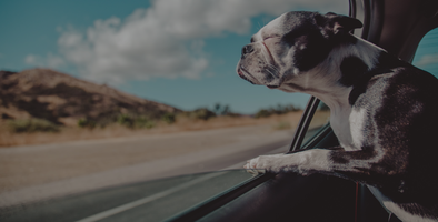 Pet retail marketing: 4Knines triples spend volume with AI