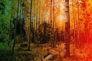 Origin Stories and the Aspen Trees